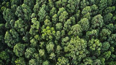 Forest, dense trees