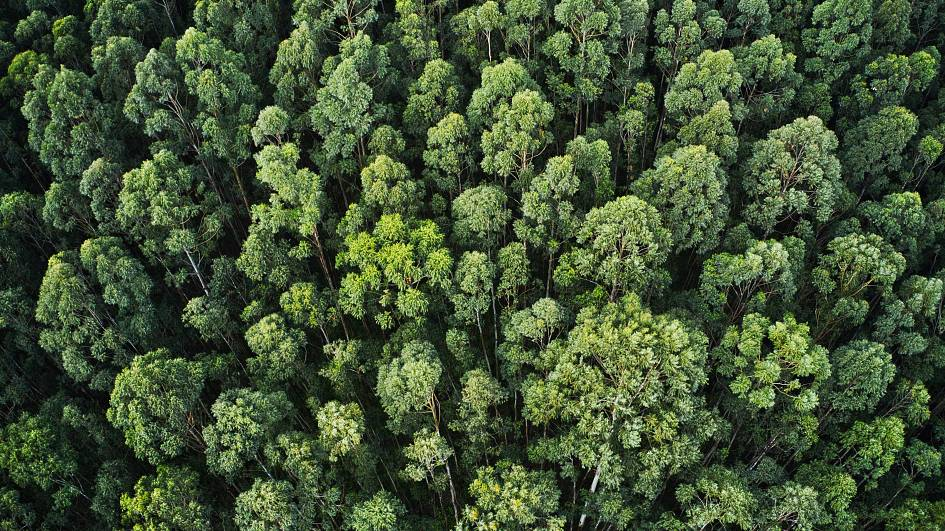 Ethiopia breaks world record by planting 350 million trees