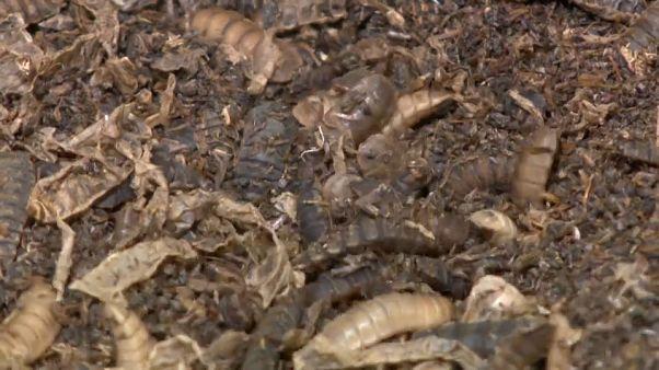 Insectos en la fábrica de la empresa ENORM