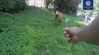 Киев: погоня за пони