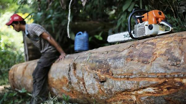 Doğu Biga Madencilik'ten Kaz Dağları iddialarına yanıt