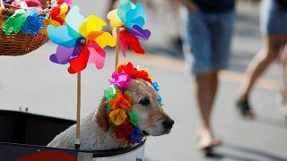 Nach Berlin Hamburg: 200.000 beim Christopher Street Day erwartet
