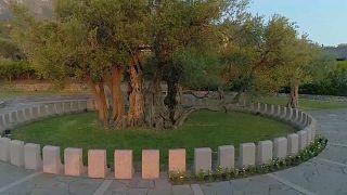 شاهد: ما قصة شجرة زيتون يفوق عمرها عمر المسيح؟