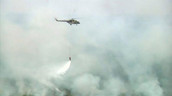 МЧС России: площадь лесных пожаров сокращается