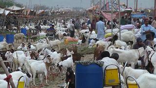 شاهد: سوق الماشية في باكستان تشهد اكتظاظا تحضيراً لعيد الأضحى