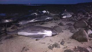 Islanda: il mistero delle balene spiaggiate
