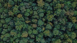 Türkiye'de A'dan Z'ye orman haritası: Yüzölçüm ve nüfusa göre en ormanlık iller