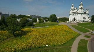 Polish city becomes awash with yellow thanks to blooming sunflower field
