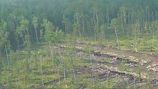 قطع الأشجار المخالف للقانون تسبب في إشعال بعض حرائق الغابات في سيبيريا