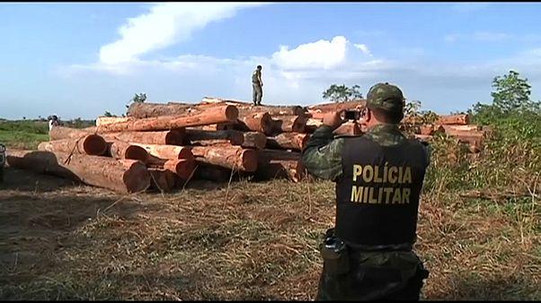 La deforestación de la Amazonia brasileña crece un 278% en un año