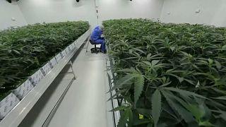 شاهد:  الماريجوانا الطبية  باتت متاحة في لويزيانا