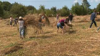 Watch: Farmers create natural straw intend to break plastic's back