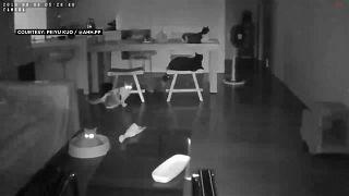 القطط فتحت عيونها ما إن بدأت الشقة بالارتجاج