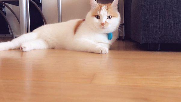 Ο ...Σύρος γάτος πρόσφυγας της Ειδομένης ζει πλέον ξέγνοιαστος στη Σουηδία