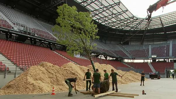 Mahnmal in Stadion: Ein Wald entsteht