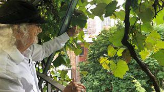 Сколько стоит вино с Манхэттена