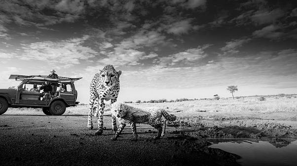 A Wildlife Photographer shows us the personality and plight of animals