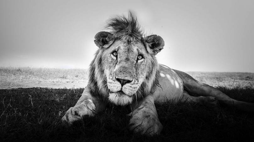 The King Rests: Purdy Photography