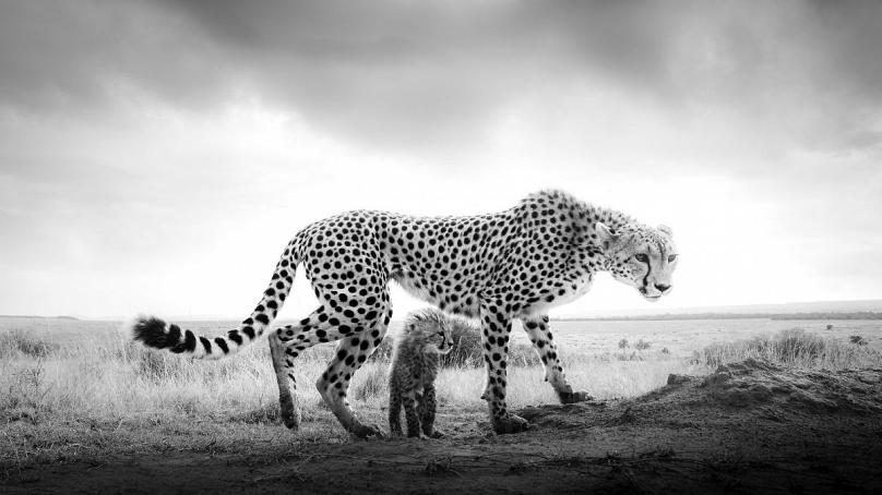Under Protection: Purdy Photography