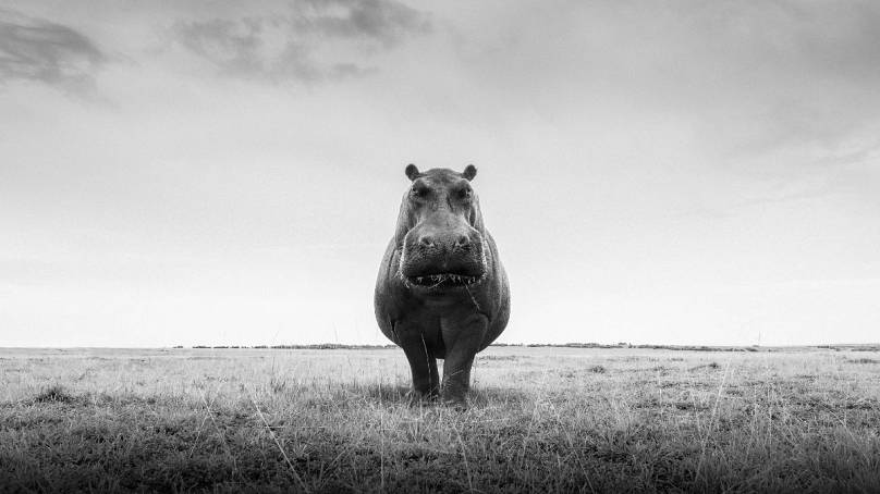 One Hippo: Purdy Photography
