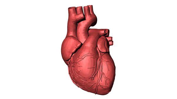 چاپ سه بعدی قلب انسان؛ آیا دانشمندان به تولید اندامهای انسانی نزدیکتر شدهاند؟