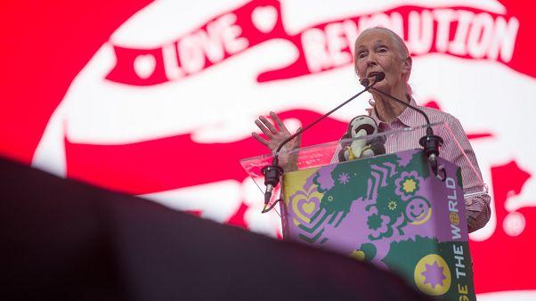 """Jane Goodall: """"Még nem túl késő lelassítani a klímaváltozást"""""""