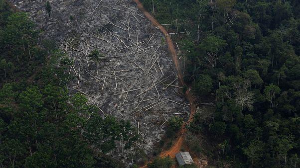 Brezilya'da yok edilen Amazonların hava görüntüsü