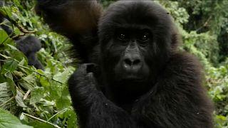 WWF: le popolazioni di animali nelle aree forestali si sono dimezzate in 50 anni