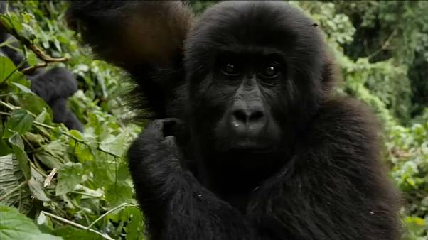 WWF beklagt Wald-Notstand: Viele Populationen seit 1970 halbiert