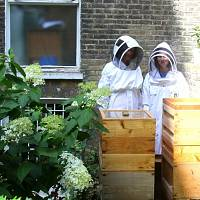I visited a 60,000 honey bee sanctuary in the heart of London