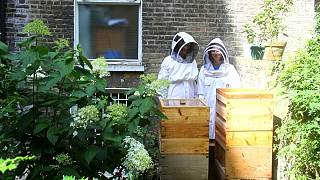 I visited a 120,000 honey bee sanctuary in the heart of London