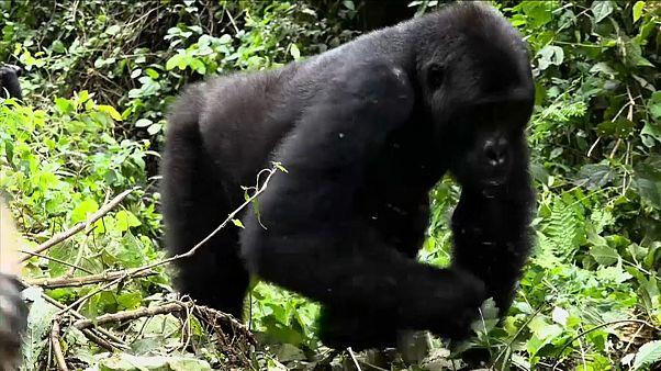 "WWF pide declarar ""emergencia planetaria"""