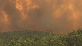Grécia: Chamas em Eubeia já destruíram parte de reserva da rede Natura
