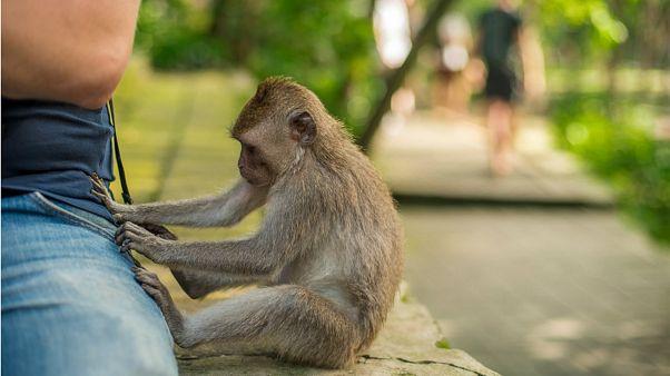 چرا تاکنون در طی پدیده «فرگشت» حتی یک میمون به انسان تبدیل نشده است؟