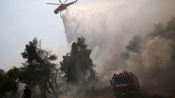 Incendies en Grèce : La solidarité sauve Eubée de la catastrophe écologique