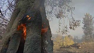 Grecia, brucia ancora Evia: al lavoro oltre 200 pompieri, 11 veivoli e volontari