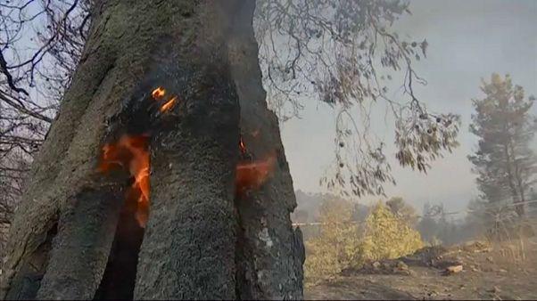 Sikeresen oltják az erdőtüzeket a görögországi Évia szigetén