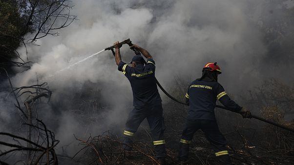 """Grèce : l'incendie sur l'île d'Eubée """"contenu"""""""