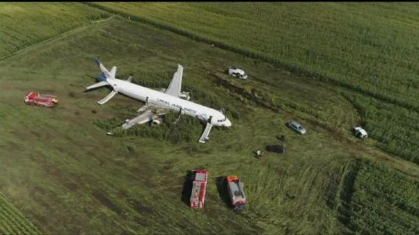 I gabbiani costringono il volo Mosca-Sinferopoli ad un atterraggio di emergenza