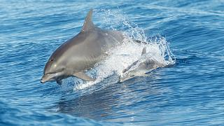 Measles-like disease killing dolphins in Tuscany, scientists reveal