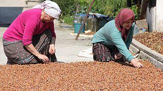 Yeni sezonda rekor düzeyde iç fındık ihracatı bekleniyor