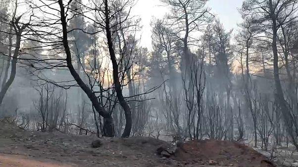 2500 Hektar Pinienwald sind verbrannt.