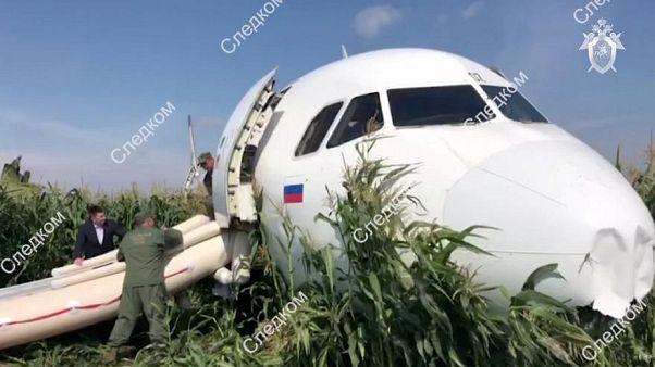 Spektakuläre Landung im Maisfeld: Piloten werden zu Helden erklärt