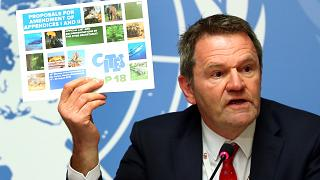 Wildlife trade: UN watchdog meets to protect more species