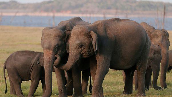 L'ivoire toujours commercialisé dans l'UE