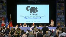 """Conférence de la CITES : contrer une extinction """"sans précédent"""" des espèces sauvages"""