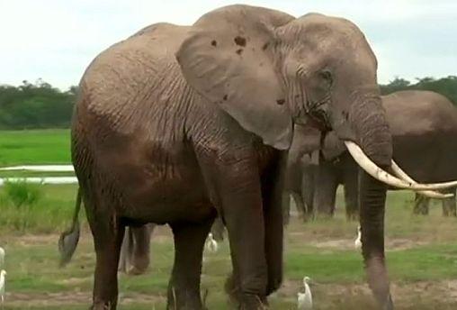 File image of elephants in Kenya