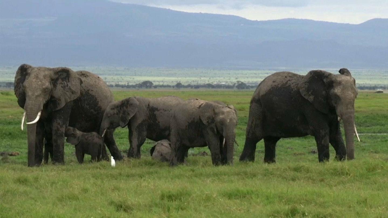 elefántok látványa