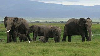 Keine Elefanten für Zirkus und Zoo