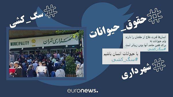 واکنشها به سگکشی تهران؛ از تومار شهروندان تا توییت شهردار